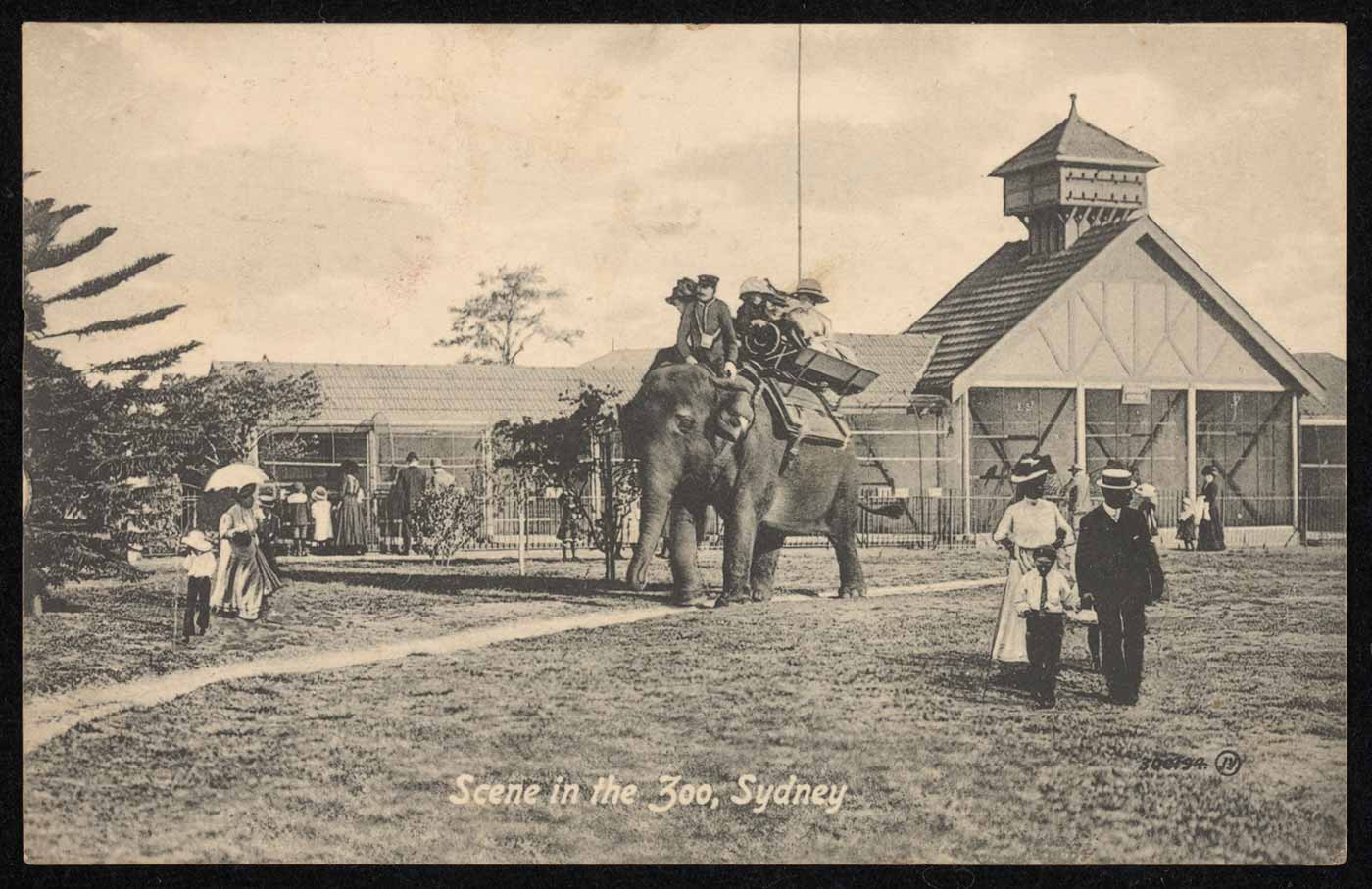 A black and white photograph titled 'Scene in the Zoo, Sydney'. An elephant carrying several people on its back is at centre, with people looking at bird aviaries in the rear. Several other people stroll across a lawn.