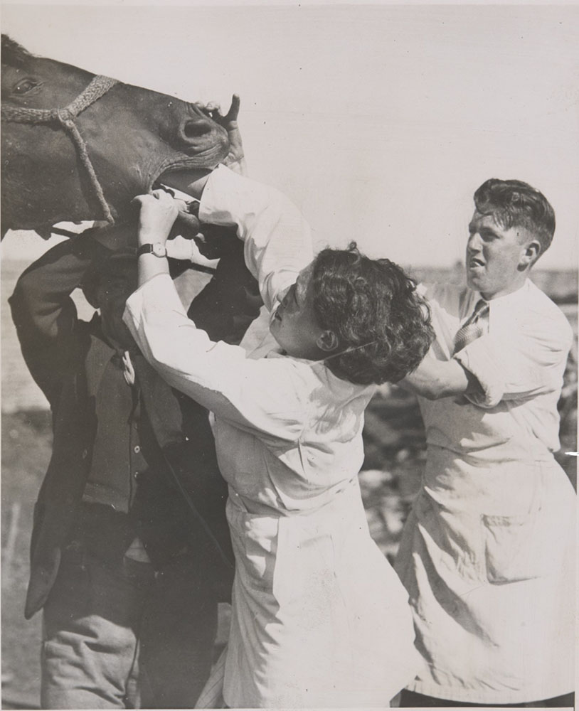 Black and white photo showing side view of a woman and two men, and part of a horses head. The woman, who wears a white coat, has her hand in the horse's mouth. - click to view larger image