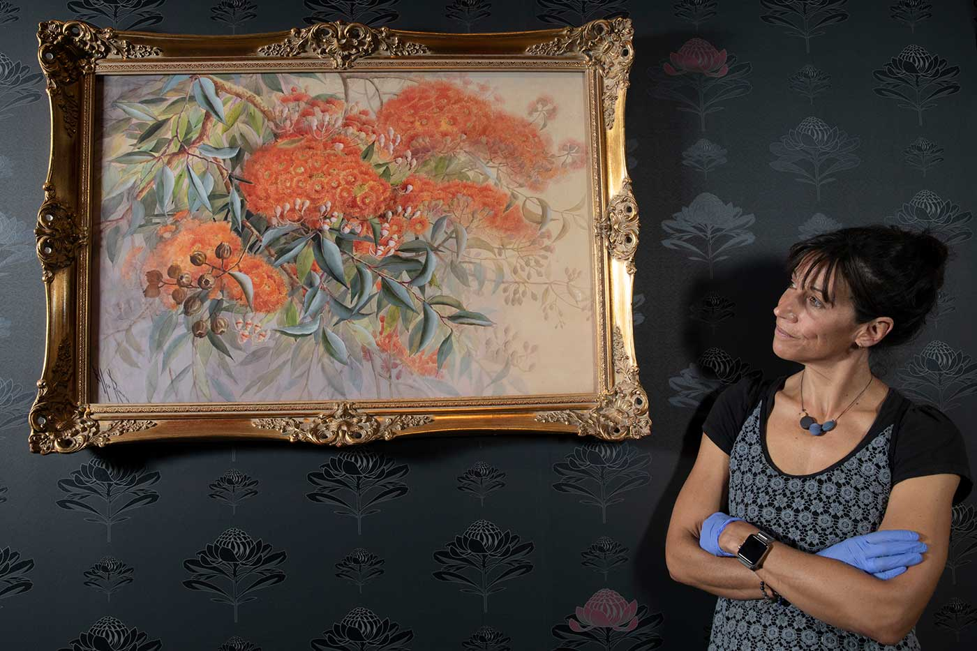 A female wearing blue conservation gloves stands with arms folded while looking up at a painting on the wall with decorative dark wall paper. The painting which is ornately framed features bright coloured Australian native plants and flowers.