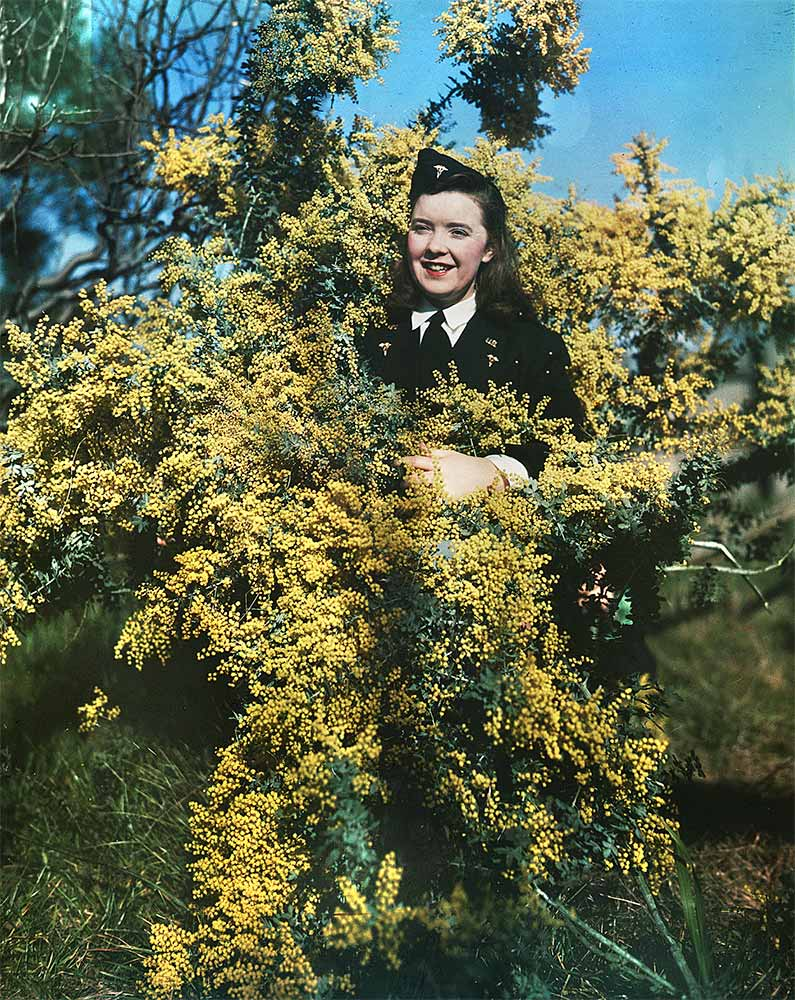 A woman dressed in a uniform coat and cap stands amidst a wattle, with yellow flowers. - click to view larger image