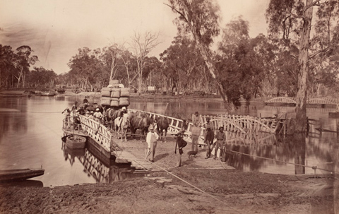 Black and white image showing a wooden vessel moored to a riverbank with ropes. Several horses and a wagon loaded with bales are at the rear of the punt. Various people are standing on the punt and there are many gum trees lining the river.