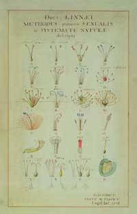 Image of several plants classified on the basis of their sexual characteristics