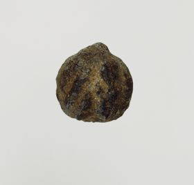 Walnut-shaped nut with a lustrous surface of a grey or brownish-black colour.