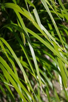 Detail image showing long green blades of grass.