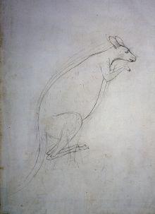 Rought sketch of a kangaroo.
