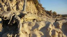 Sandy landscape with gnarled tree stump.