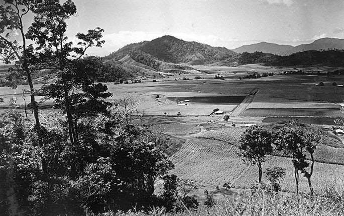 Black and white photograph looking down on cane fields
