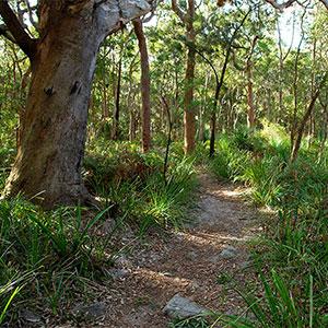 Photo of a pathway through bushland