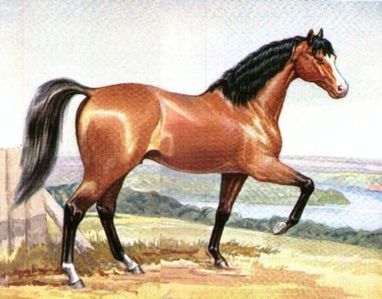 Side profile of a horse with its front right leg raised.