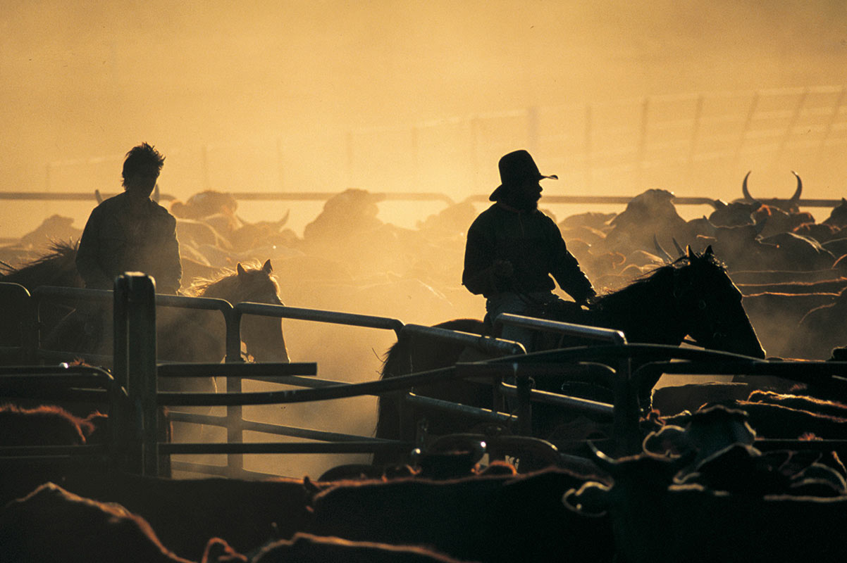 A photograph taken in the late afternoon sun of a cattle yard and two horses with riders. - click to view larger image