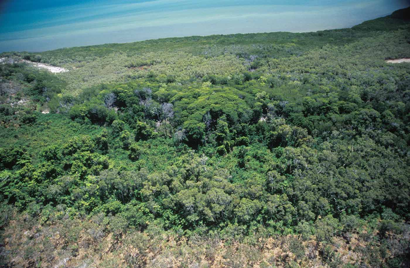 A colour photograph of an area of dense vegetation. The vegetation is thick and clumped, possibly suggesting a swamp area. Some of the larger clumps cast shadows on the other vegetation.  - click to view larger image