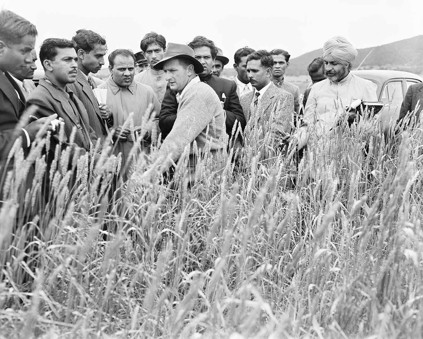 A black and white photo of a group of men inspecting a wheat crop.