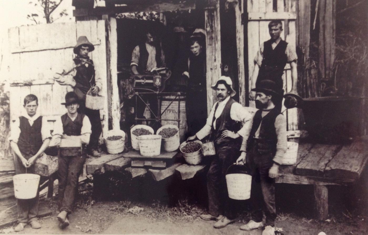 A black and white photo of eight men, most of them holding buckets of berries.