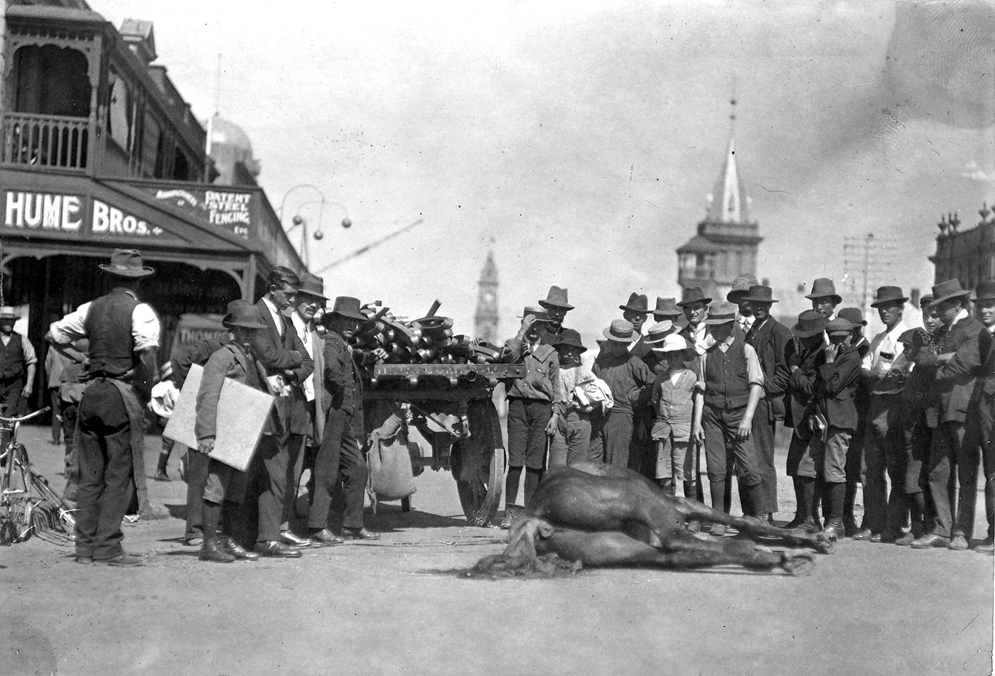 Black and white photo of a group o men and boys on a city street, looking down at a horse that lies on the road. - click to view larger image