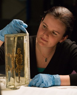 Sarah Streatfeild measures the size of one of the Museum's wet biological specimen cases