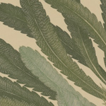 Details of leaves from a Banksia serrata