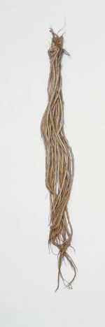 Flax sample of twenty twisted cords, ending in loose strands, knotted together at the upper edge and held together by a thin band.