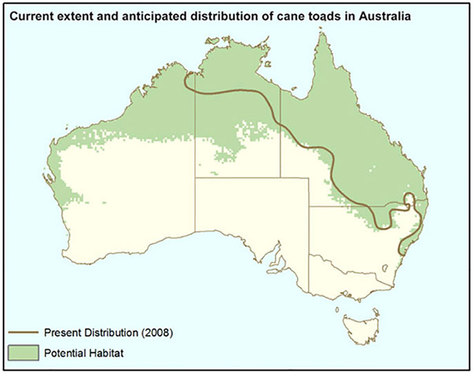 Map of Australia showing current extent and anticipated distribution of cane toads, 2008