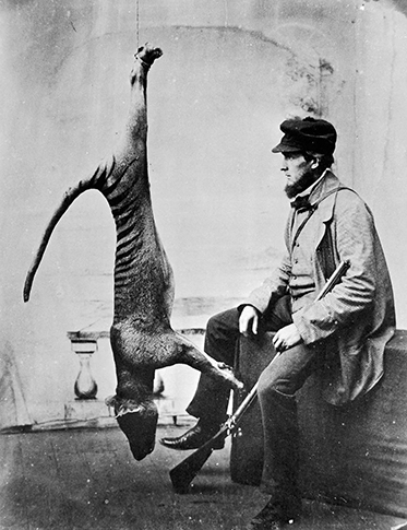 Man holding rifle poses with dead thylacine strung up from ceiling.