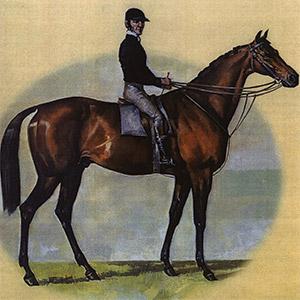a horse and jockey