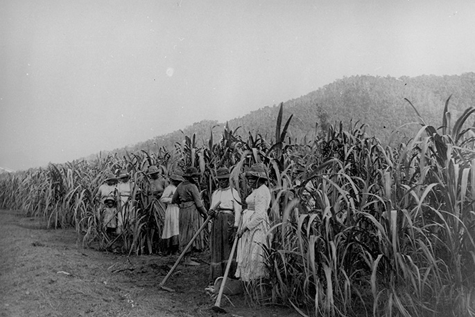 A group of seven women and what appears to be a child all wearing long dresses and holding cane-cutting tools standing in front of tall sugar cane.