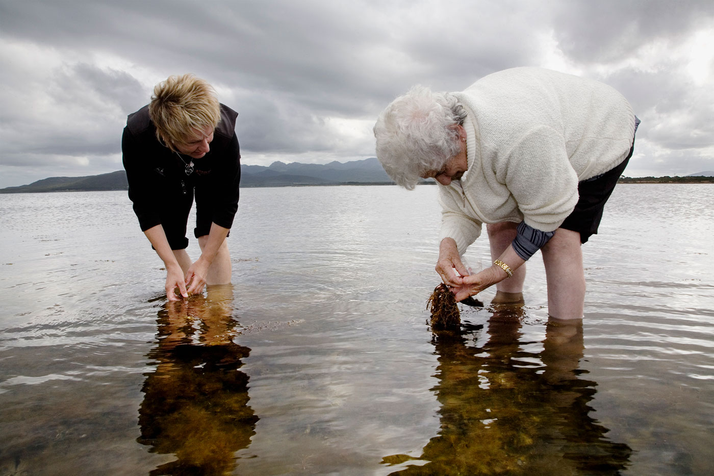 Two women standing in water and bending down looking for shells.