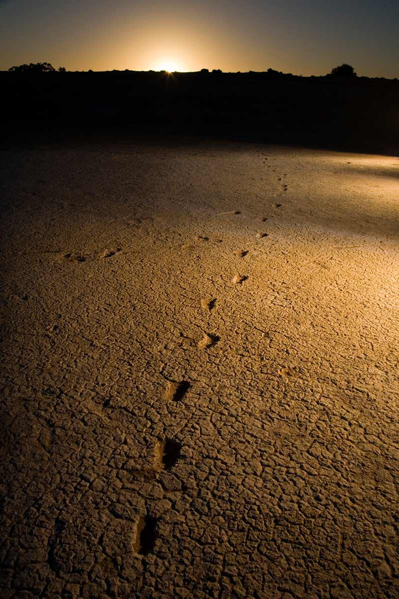 Human footprints on a sandy surface. - click to view larger image