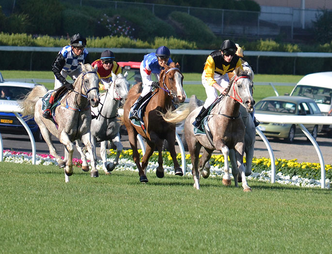 Arabians racing in the Sheikh Zayed bin Sultan Al Nahyan Cup at Moonee Valley  Racecourse