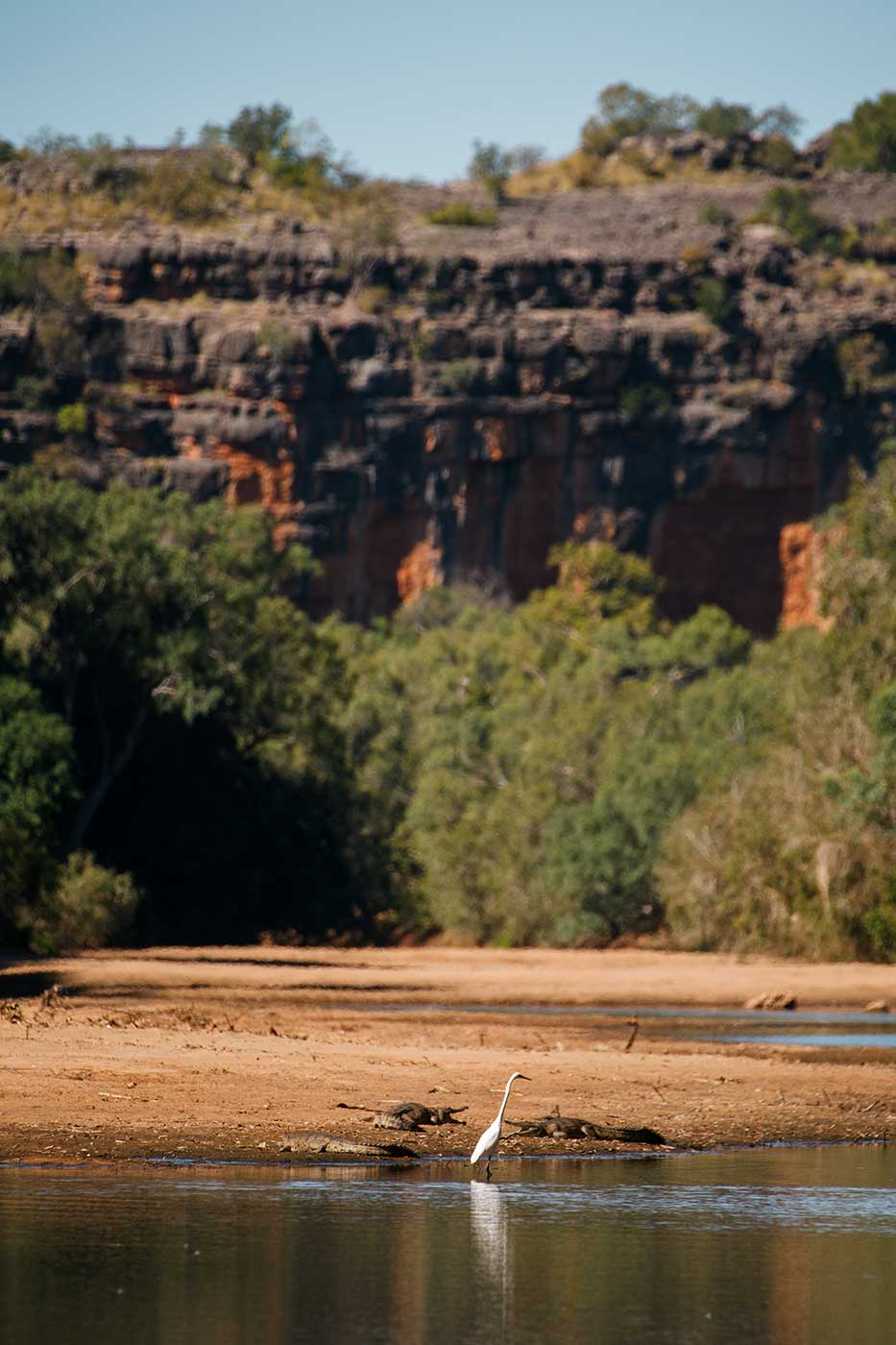 A white bird stands in shallow water near a sandy bank, where two crocodiles lie. High rock walls rise in the distance. - click to view larger image