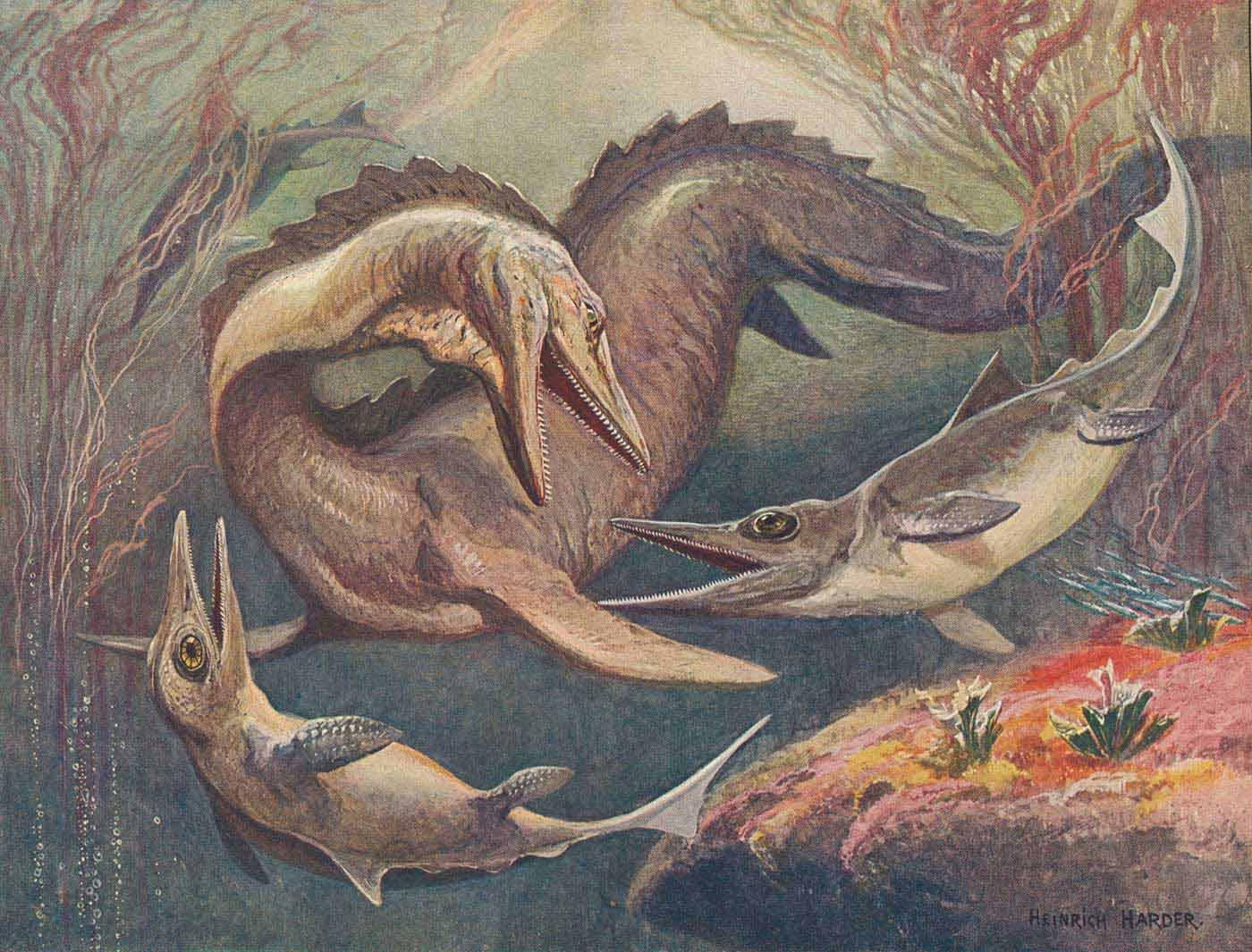Colour illustration of three marine reptiles. Two smaller animals are dophin-like in appearance, with oversized eyes. The third animal is much larger and has a longer body and tail. - click to view larger image