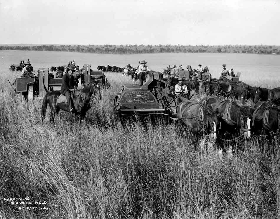 Black and white photo of men on horses in a field with harvesting machinery.