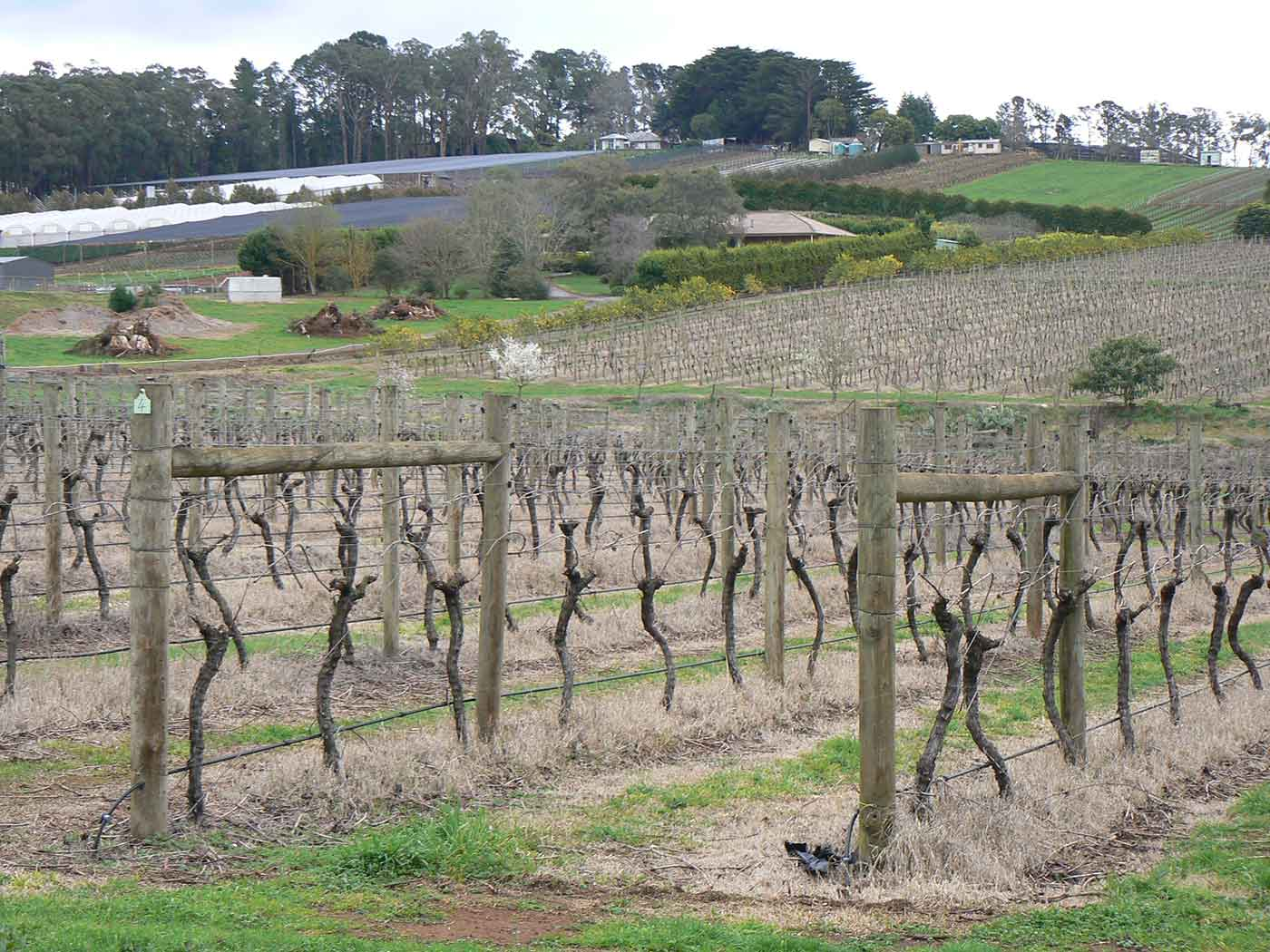 A colour photograph of vineyards and other crops.