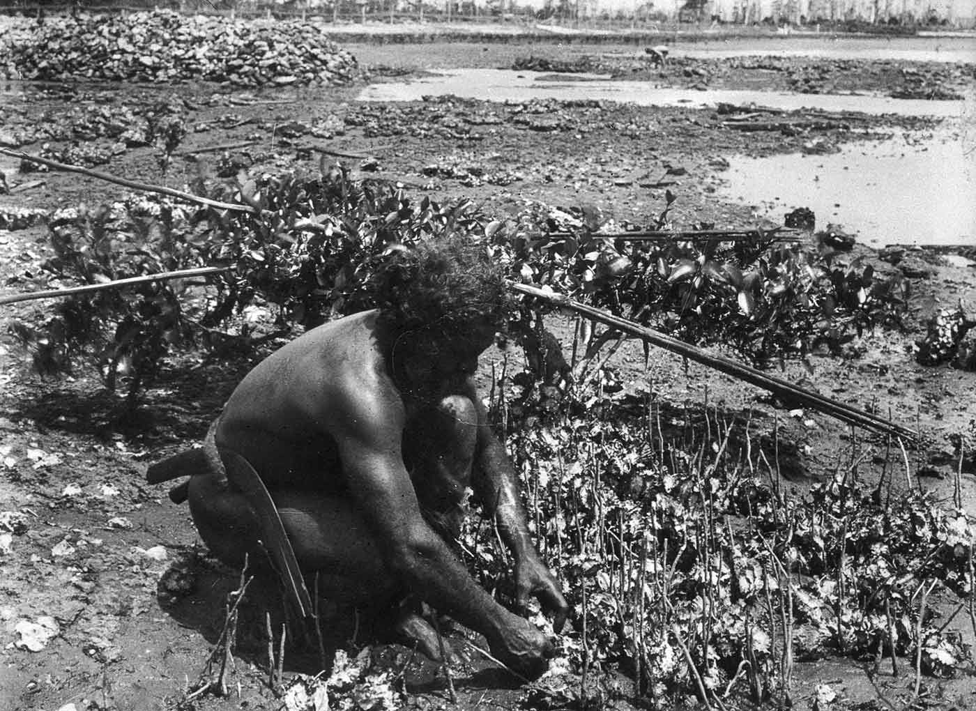 Black and white photograph of a man collecting shell fish in mudflats. - click to view larger image