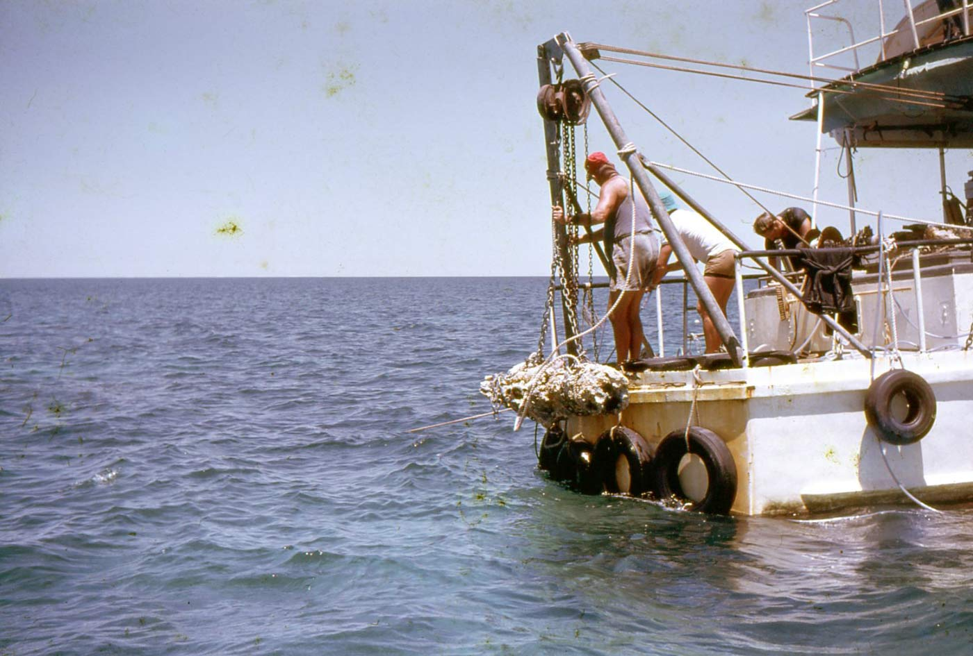 Colour photo of three men at the back of boat, hoisting a cannon covered in coral and sediment from the sea. - click to view larger image