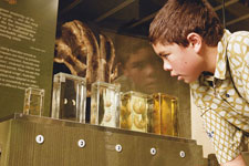 Mitchell Baum examines platypus specimens on show in Tangled Destinies.