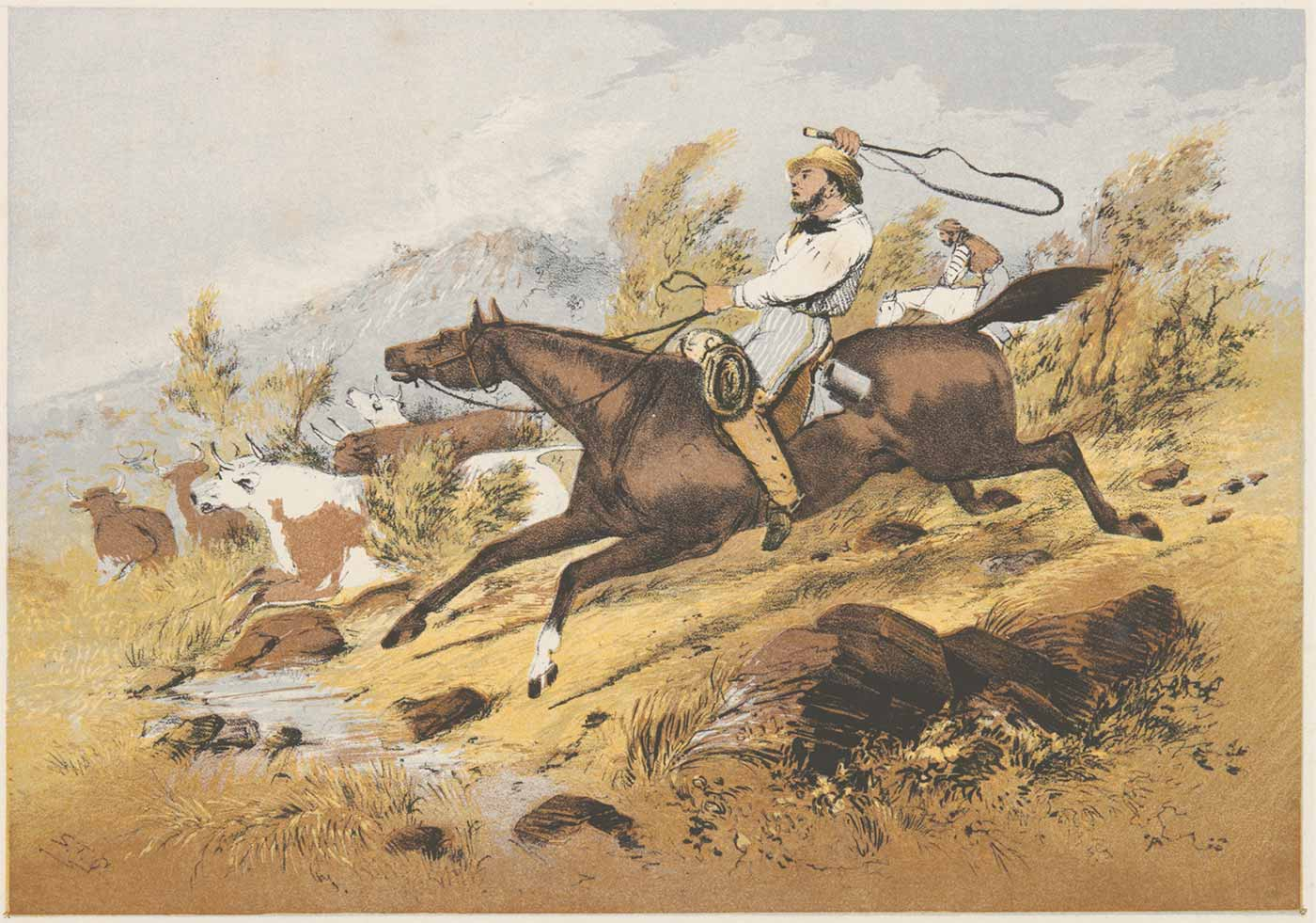 Watercolour painting of men on horses rounding up cattle through bushland. The man in the centre is wielding a whip and there is a sense of excitement. - click to view larger image
