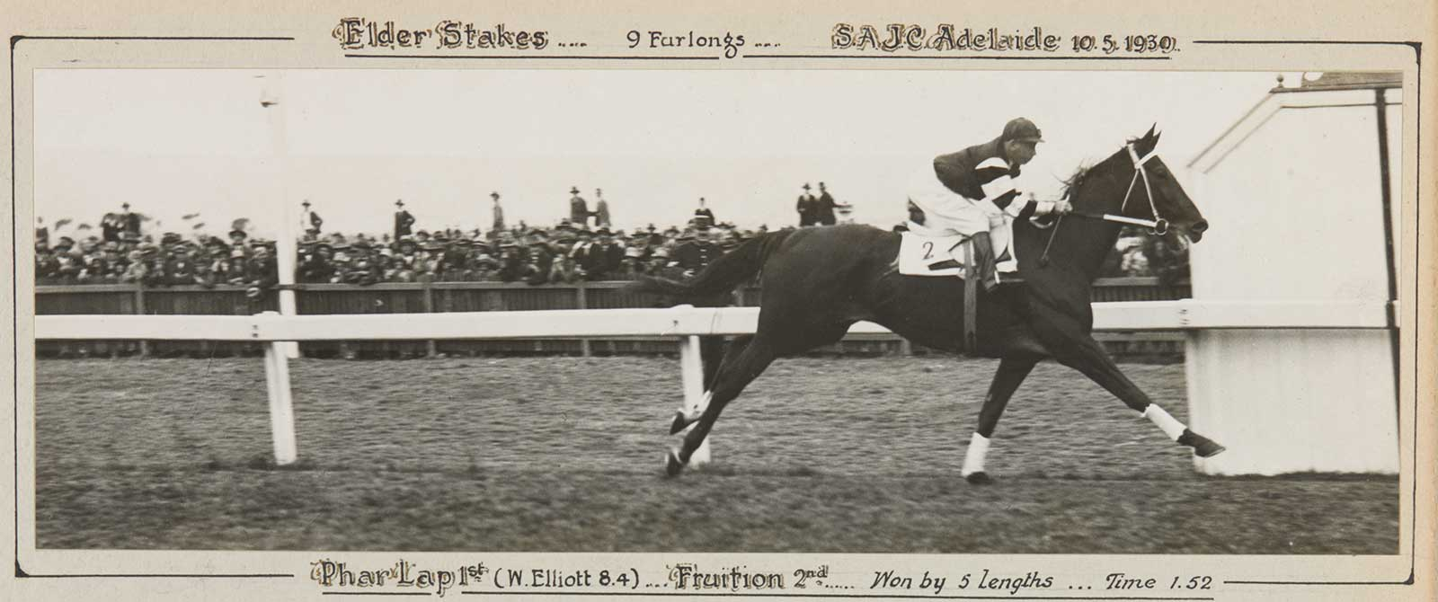 A black and white photo of Phar Lap winning the 1930 Elder Stakes. - click to view larger image