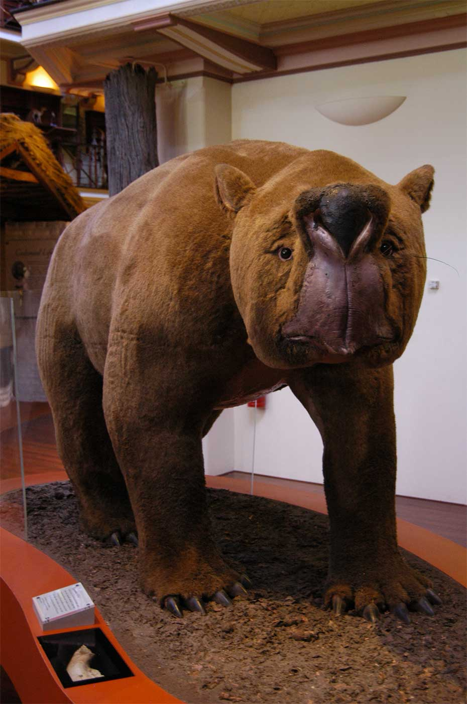 Museum exhibit of a reconstructed, large four-legged animal with brown fur and sharp claws.  - click to view larger image