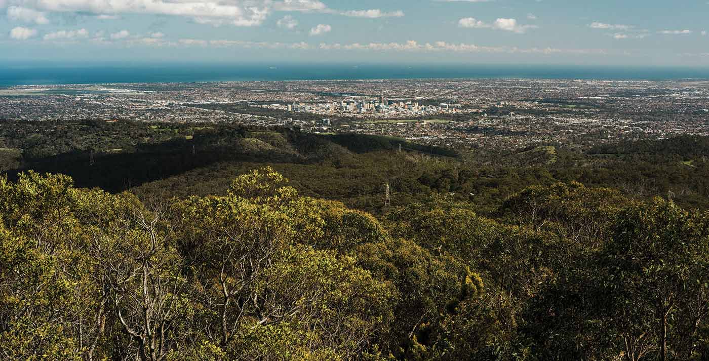 Landscape photo from above, showing gum trees in the foreground, a city and the ocean in the distance.