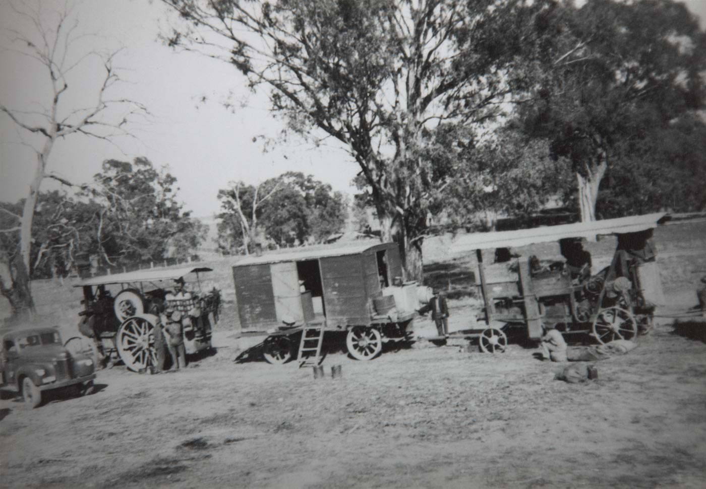 A train of steam-powered vehicles near gum trees. - click to view larger image