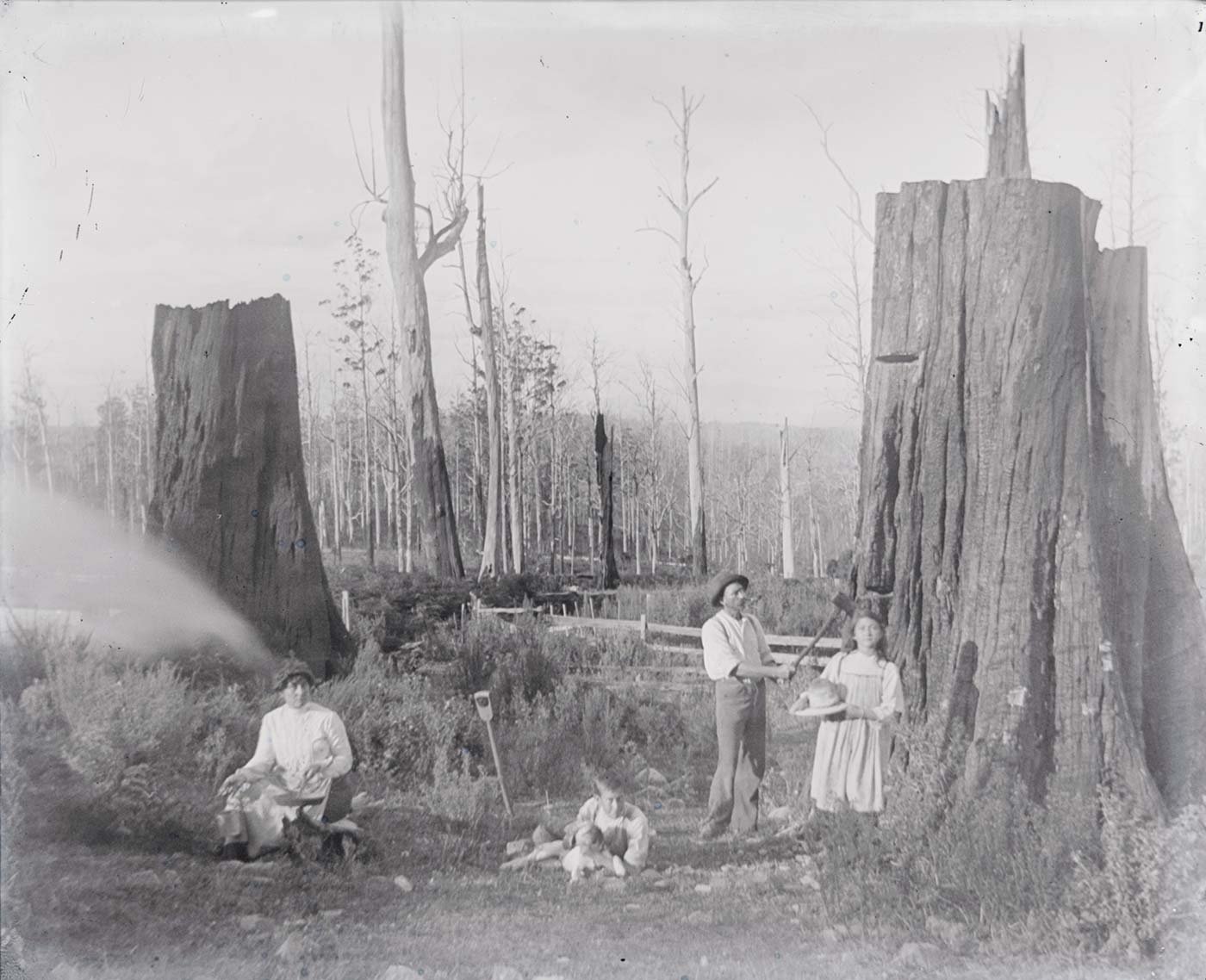 A photographic glass plate negative showing a family posing outside in between two large tree stumps. The family consists of a woman sitting to the left of the photograph, a young boy lying down in the centre with a dog, a man posing with an axe, and a young girl holding a wide brimmed hat. There are marks on the top side of the glass plate. - click to view larger image