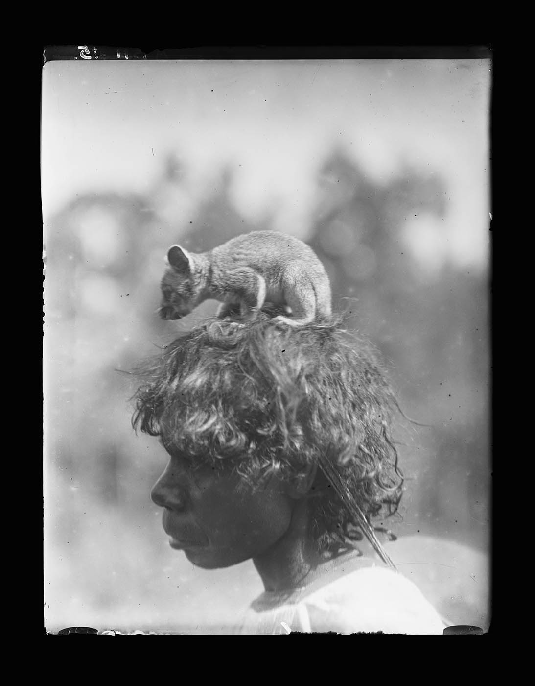 A baby possum perches on a woman's head. The woman faces to the left of the image; the sun catches highlights in her wavy hair. She is visible down to her shoulders and appears to be wearing a pale European shirt or dress. The background is out of focus and very indistinct. - click to view larger image