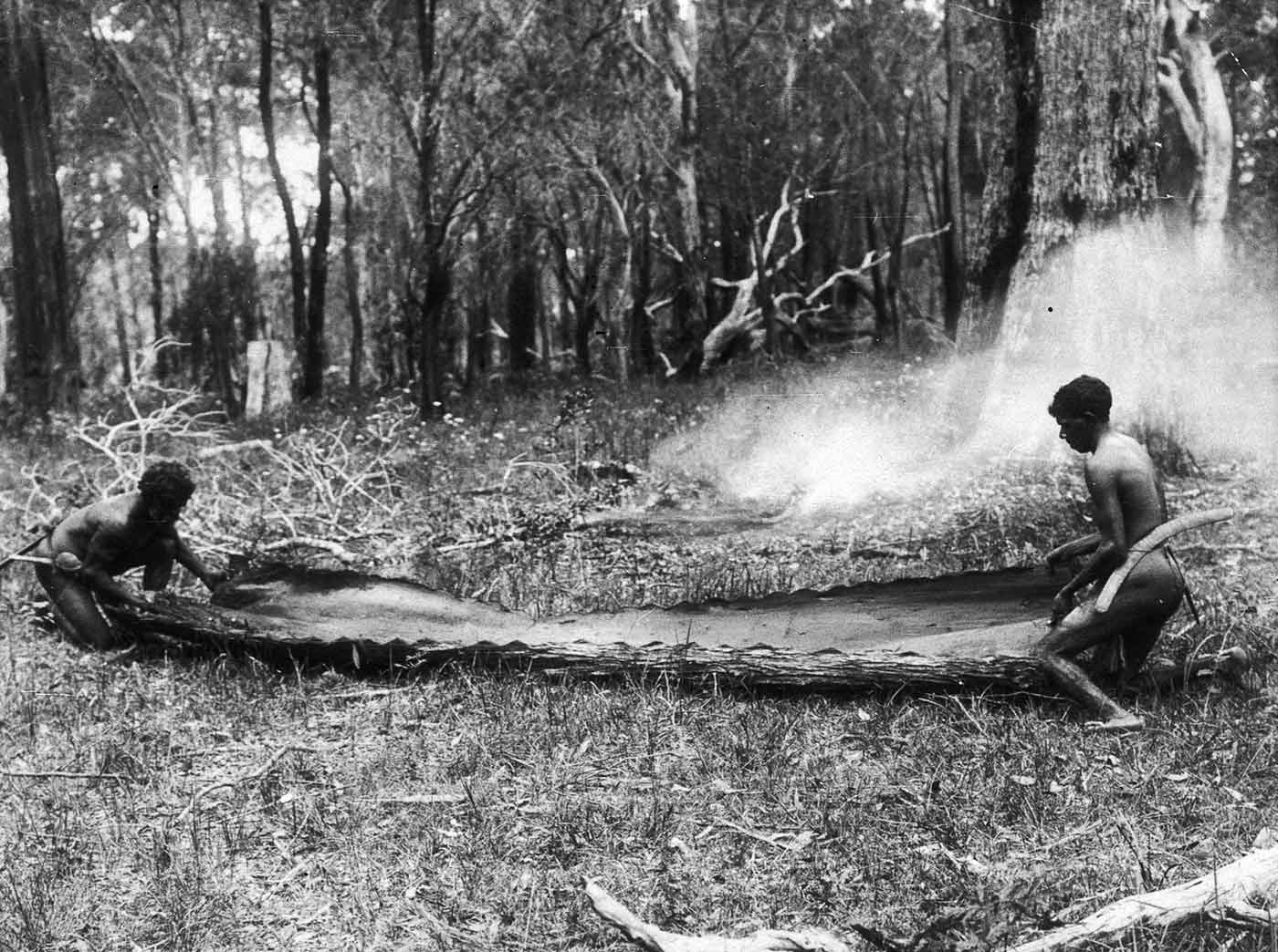 Black and white photograph of two men working with a large piece of bark which is lying on the ground in a forest opening. - click to view larger image