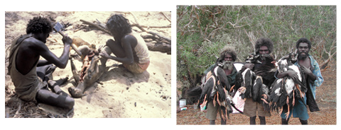 (left): James Iyuna and Melba Gunjarrwanga butcher a kangaroo, Midjadukkdorr, September 1980. (right): John Mawurndjul, James Iyuna and Japhed Nawidju after a successful magpie goose hunt, Nandel, July 2002.