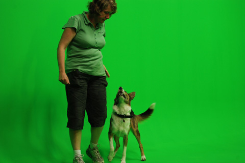 Dash's trainer Louise Harding starts warming Dash up for a day of filming.