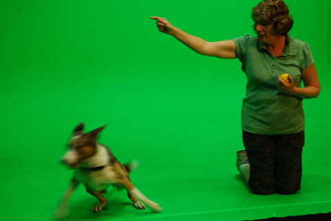 Ever tried to get a dog to run away from the ball? We were pretty impressed by what Louise can train Dash to do.