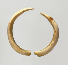Two curved boar tusks, white, but with a light yellow colouration in several places.