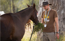 A man feeding a horse at the Tom Quilty endurance event.