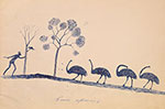 Drawing of 4 emus with an Aboriginal man throwing a spear at them with two trees in the background