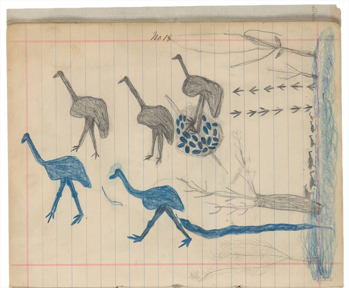 Sketchbook drawings of five emus, two blue and three grey, with emu eggs and trees  - click to view larger image